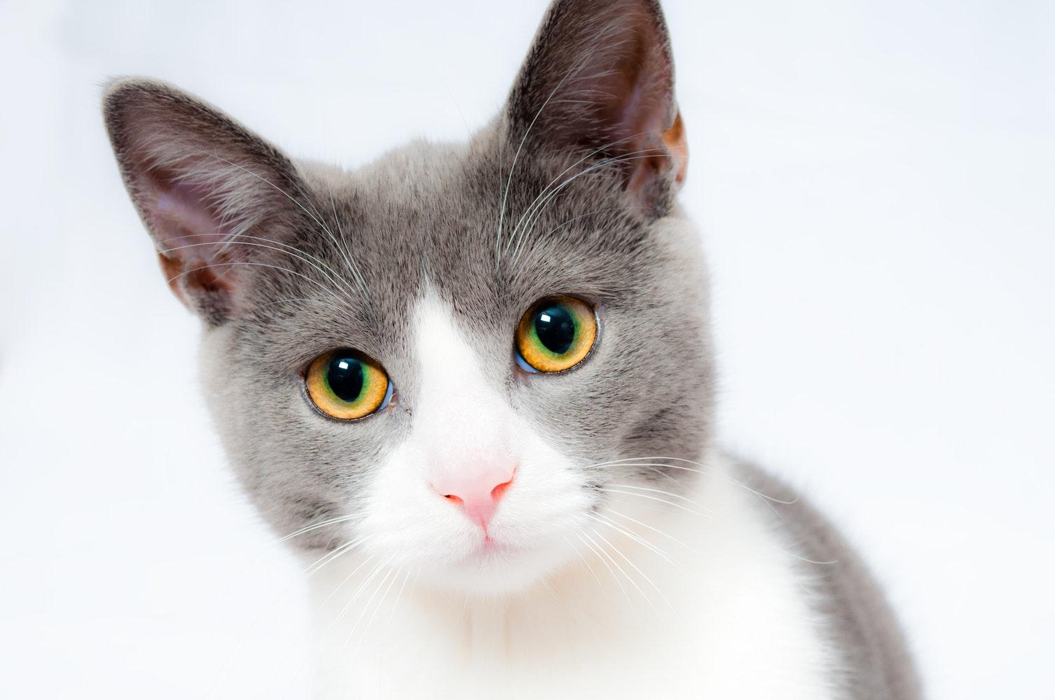 cat images pexels free stock photos