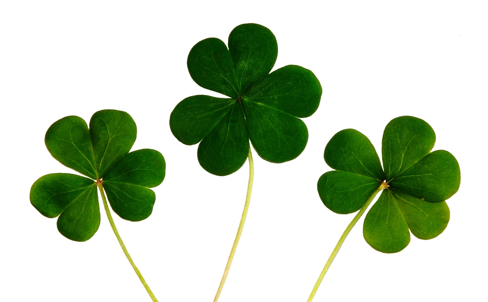 free stock photos of four leaf clover pexels