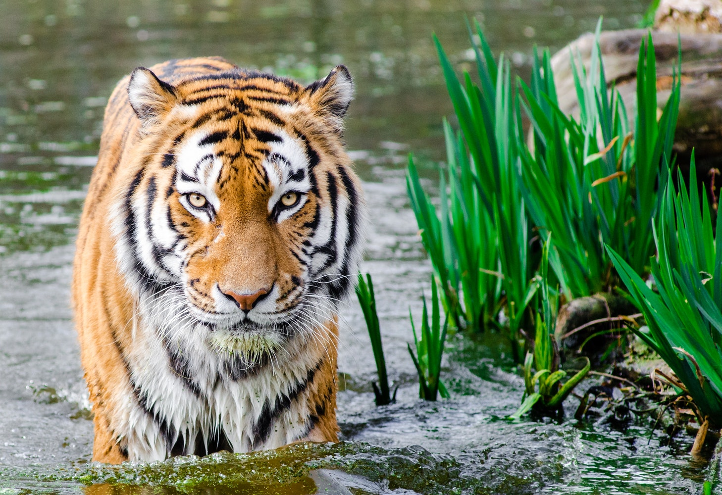 free stock photos of animals 183 pexels