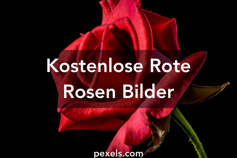 kostenlose bilder zum thema rote rosen pexels. Black Bedroom Furniture Sets. Home Design Ideas