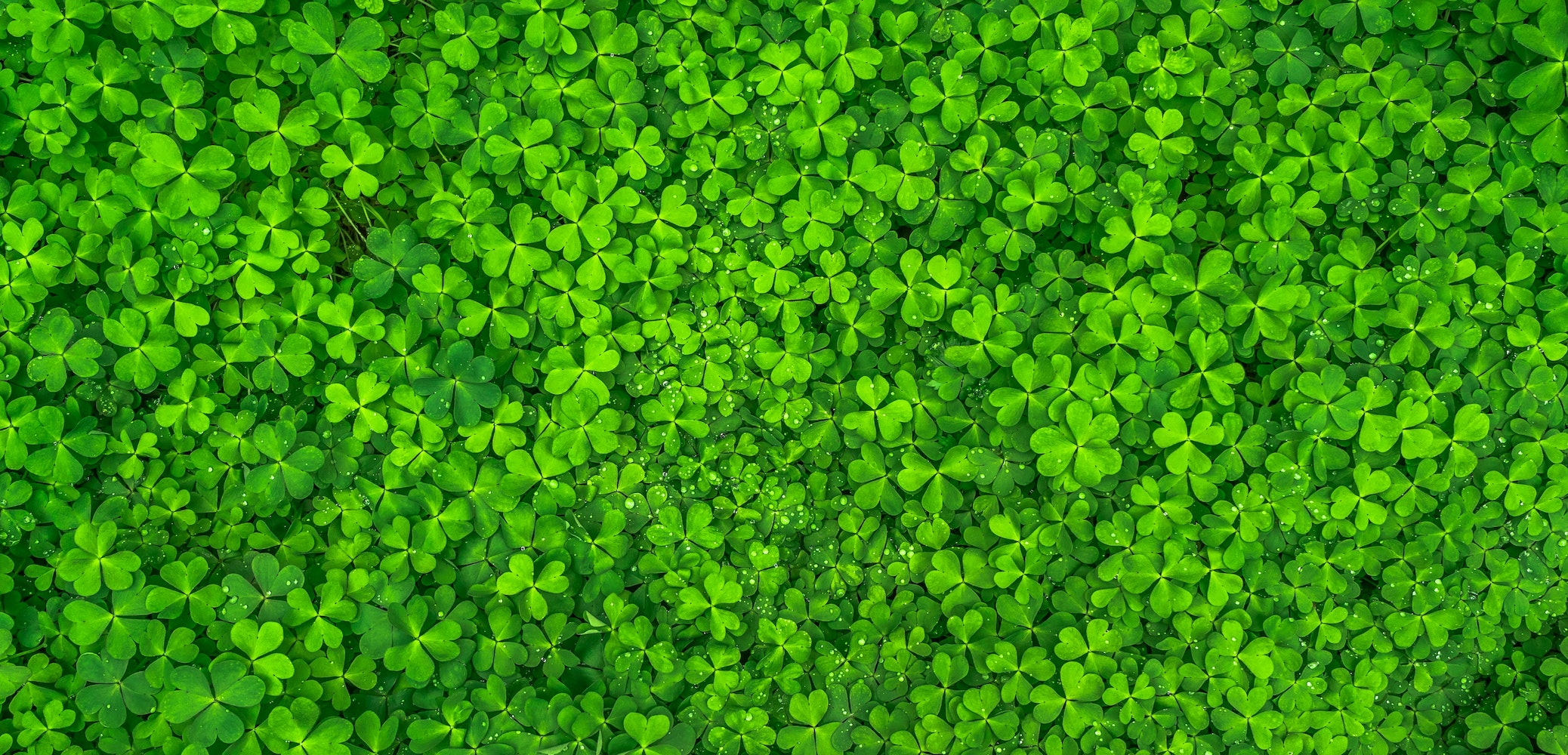 free stock photos of clover pexels