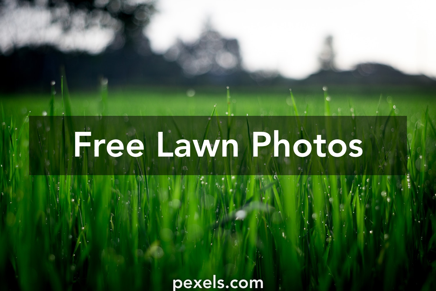 City Pictures Pexels Free Stock Photos: Free Stock Photos Of Lawn · Pexels