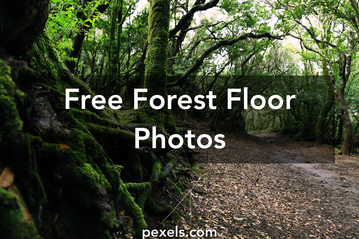 Free stock photos of forest floor pexels for Forest floor definition