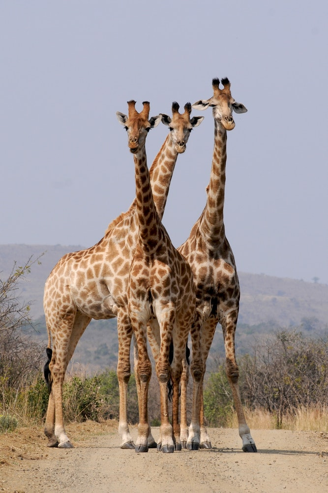 free stock photos of wild animals pexels