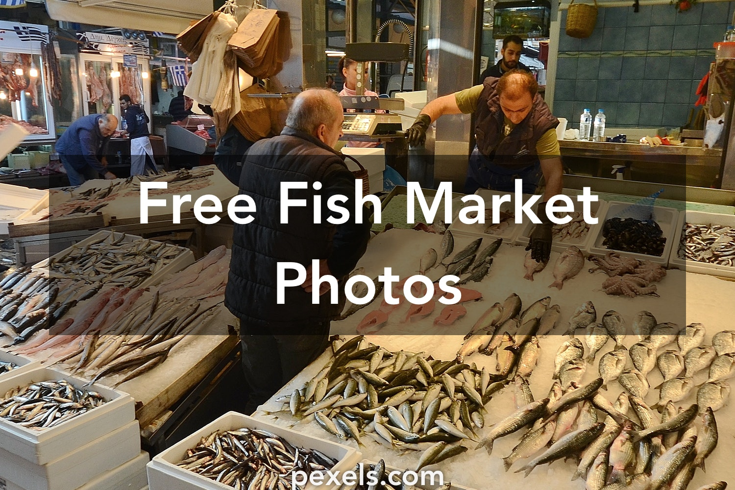 Free stock photos of fish market pexels for Fountainview fish market
