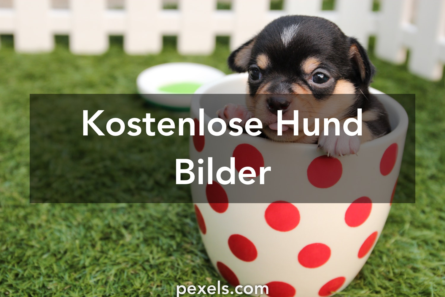 kostenlose stock fotos - photo #34