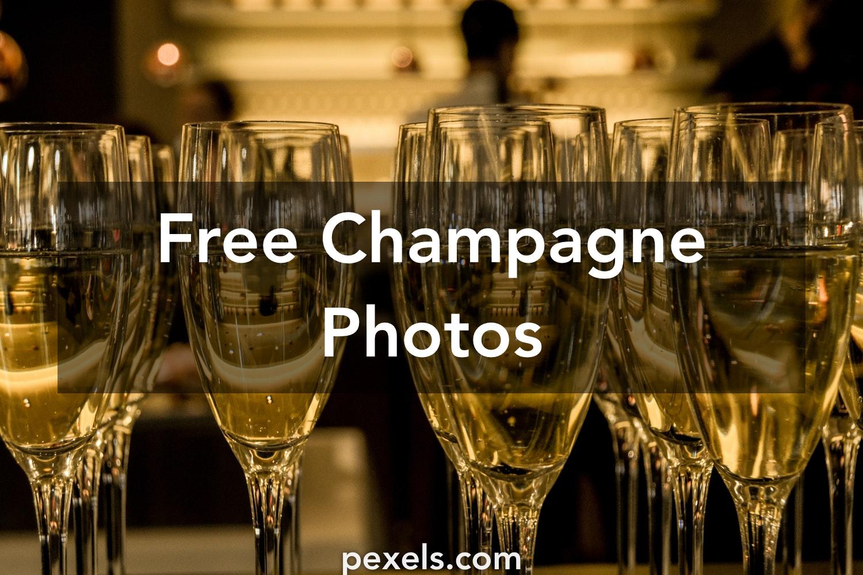 Christmas Dog Champagne Free