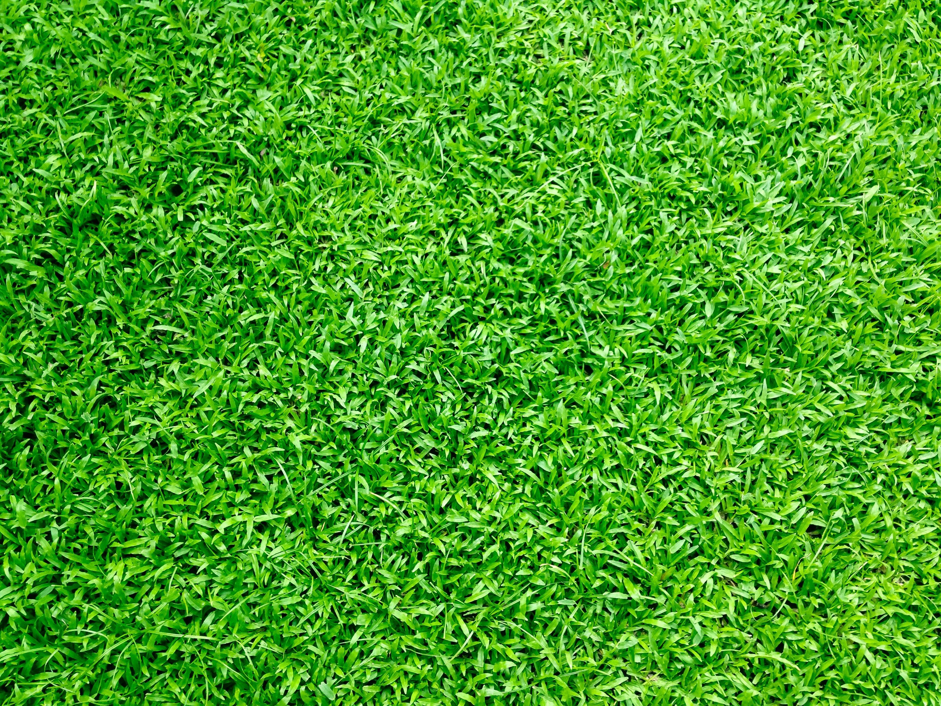 grass background. grass background n