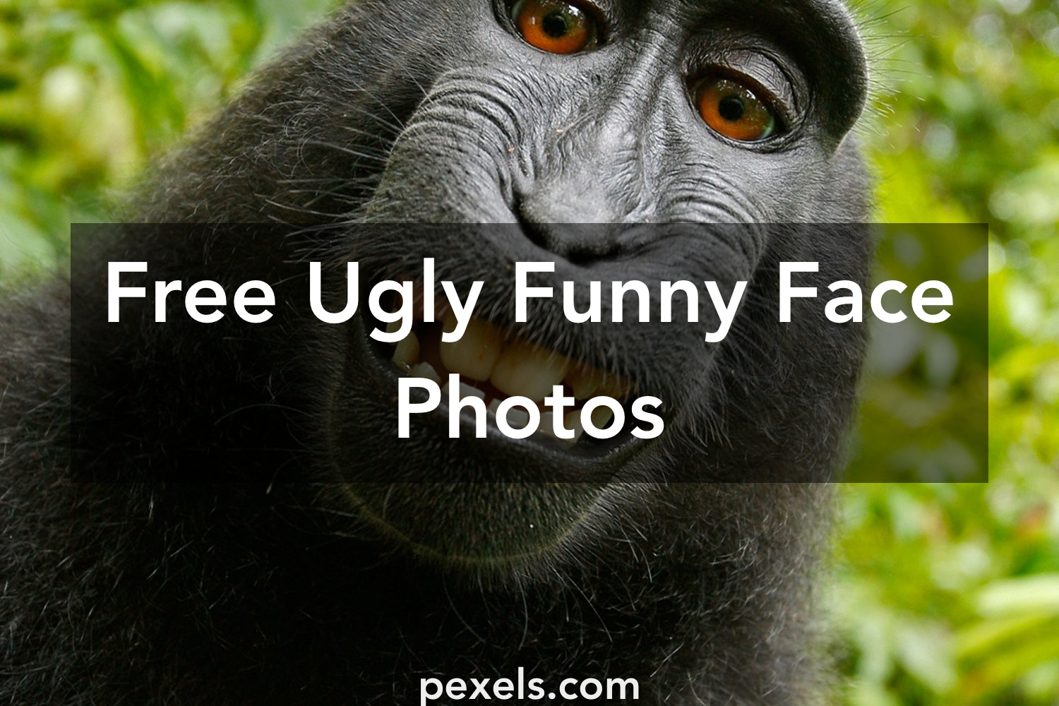 Free stock photos of ugly funny face pexels - Ugly face wallpaper ...