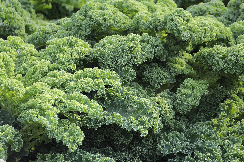 Free Stock Photos Of Kale 183 Pexels