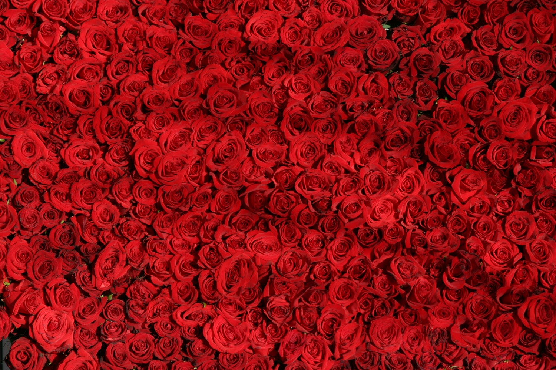 free stock photos of valentines pexels