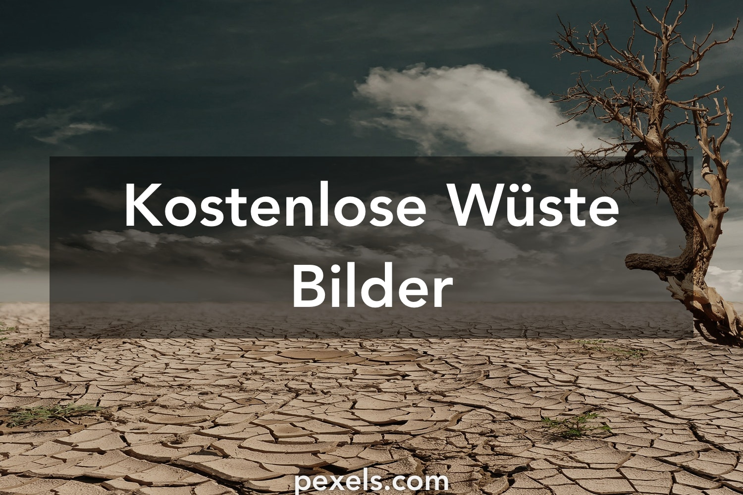 kostenlose stock fotos - photo #37